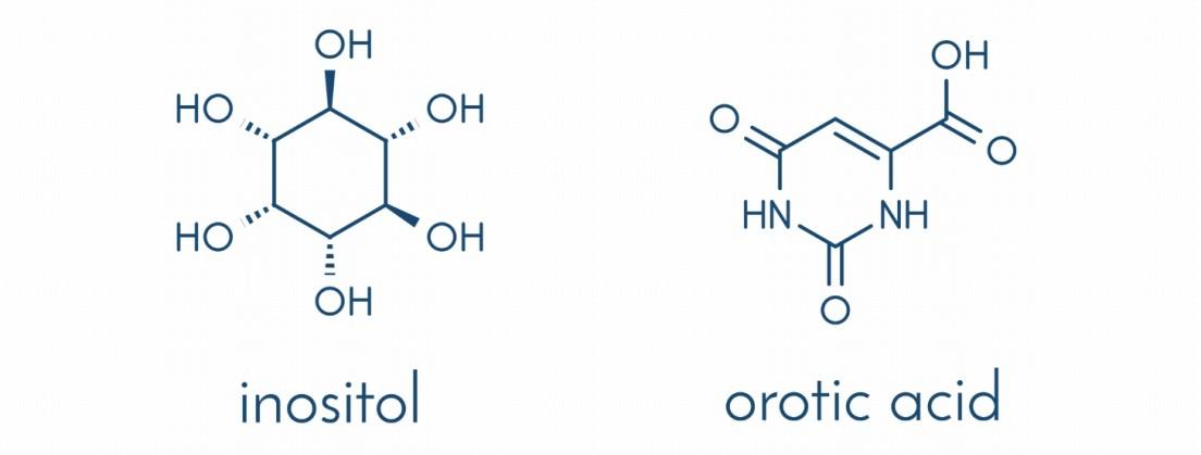 イノシトール、オロト酸を配合